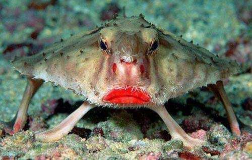 Риба-миш