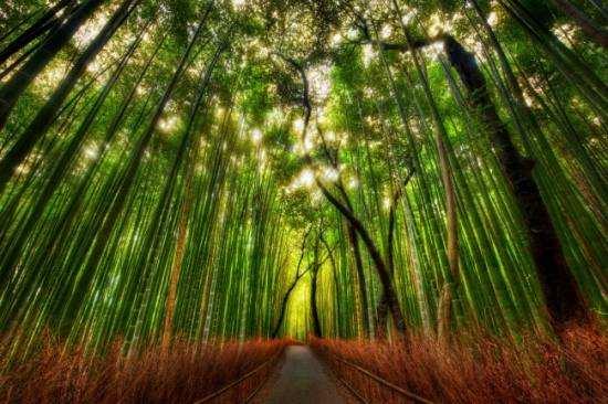 Бамбуковий ліс