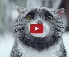 Різдв'яний кіт - мультфільм