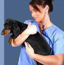 9 серпня. День працівників ветеринарної медицини
