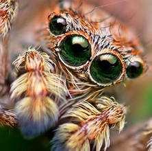 Комахи під мікроскопом