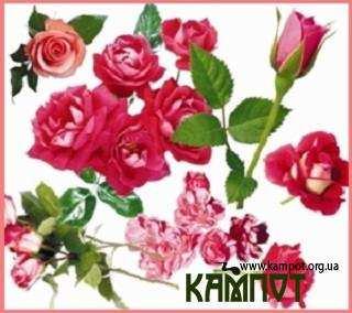 Скрап - набір рожеві троянди