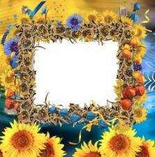 Рамки з соняшниками